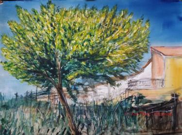 Mimosa en Provence
